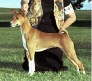 Eldorado Basenjis' 2009 puppy plans